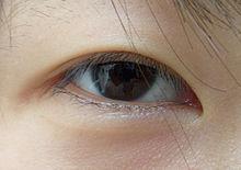 Per què els asiàtics tenen els ulls ametllats?